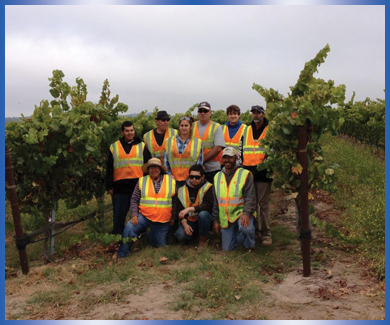 Group of nine workers standing in vineyard